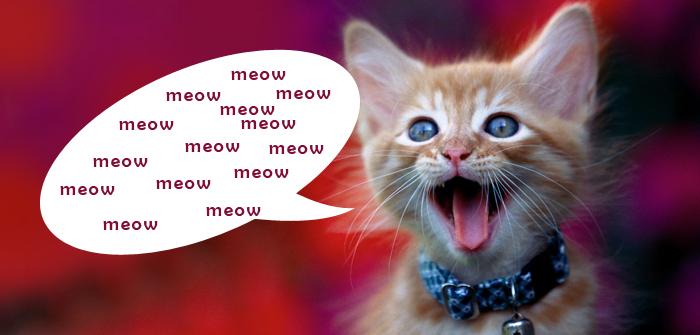 Cat Meow Noise
